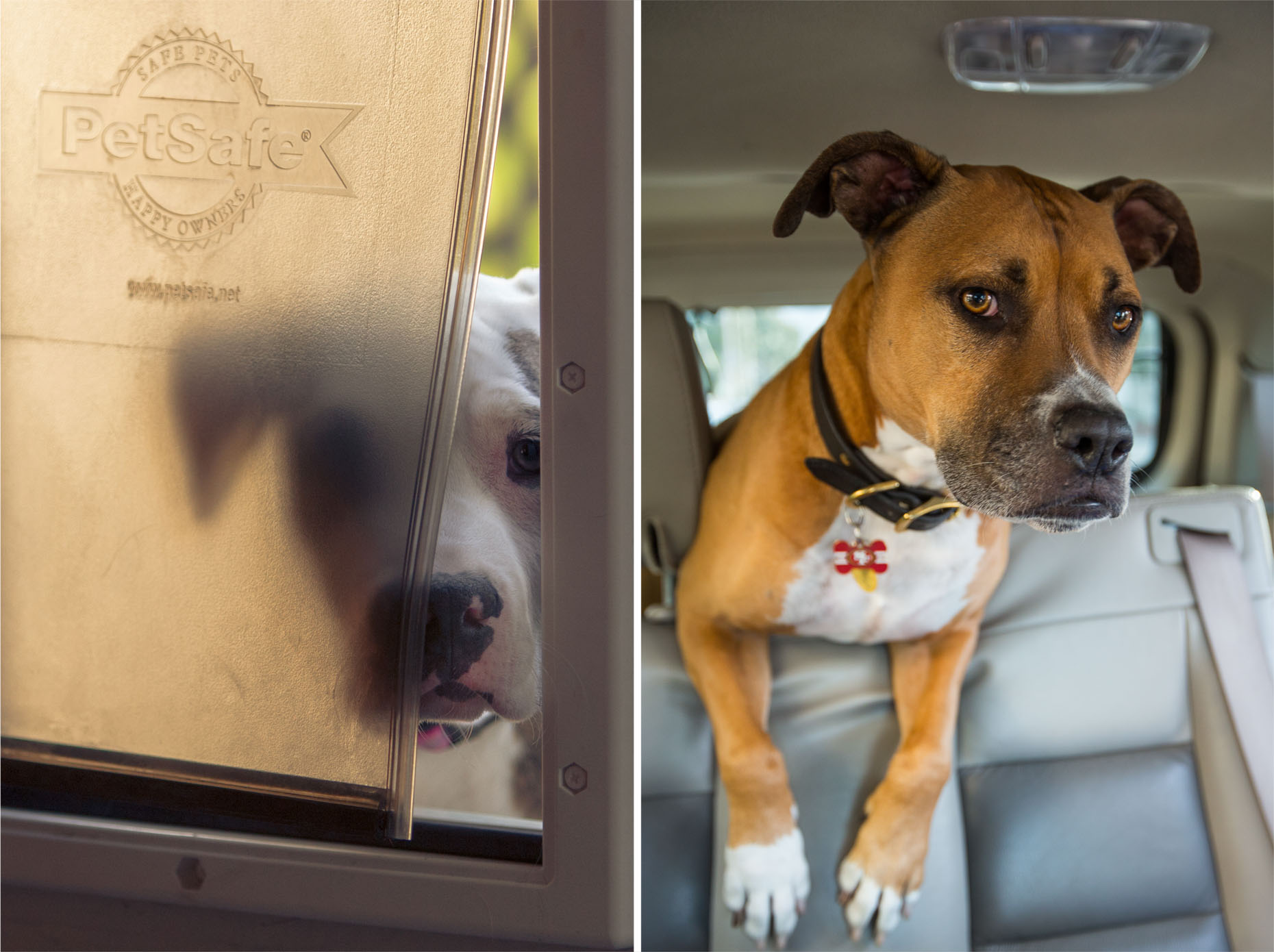 Dog Photography | Dog Peeking Through Dog Door and in Car by Mark Rogers