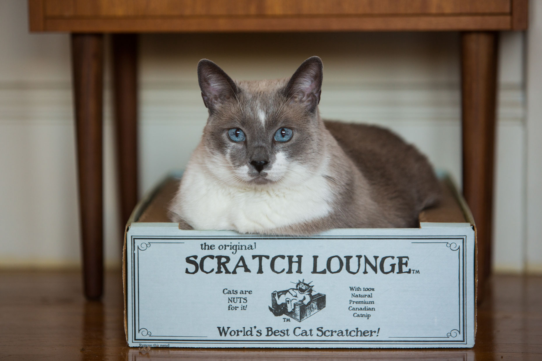 Cat Photography | Snowshoe Cat in Cat Scratcher Box by Mark Rogers