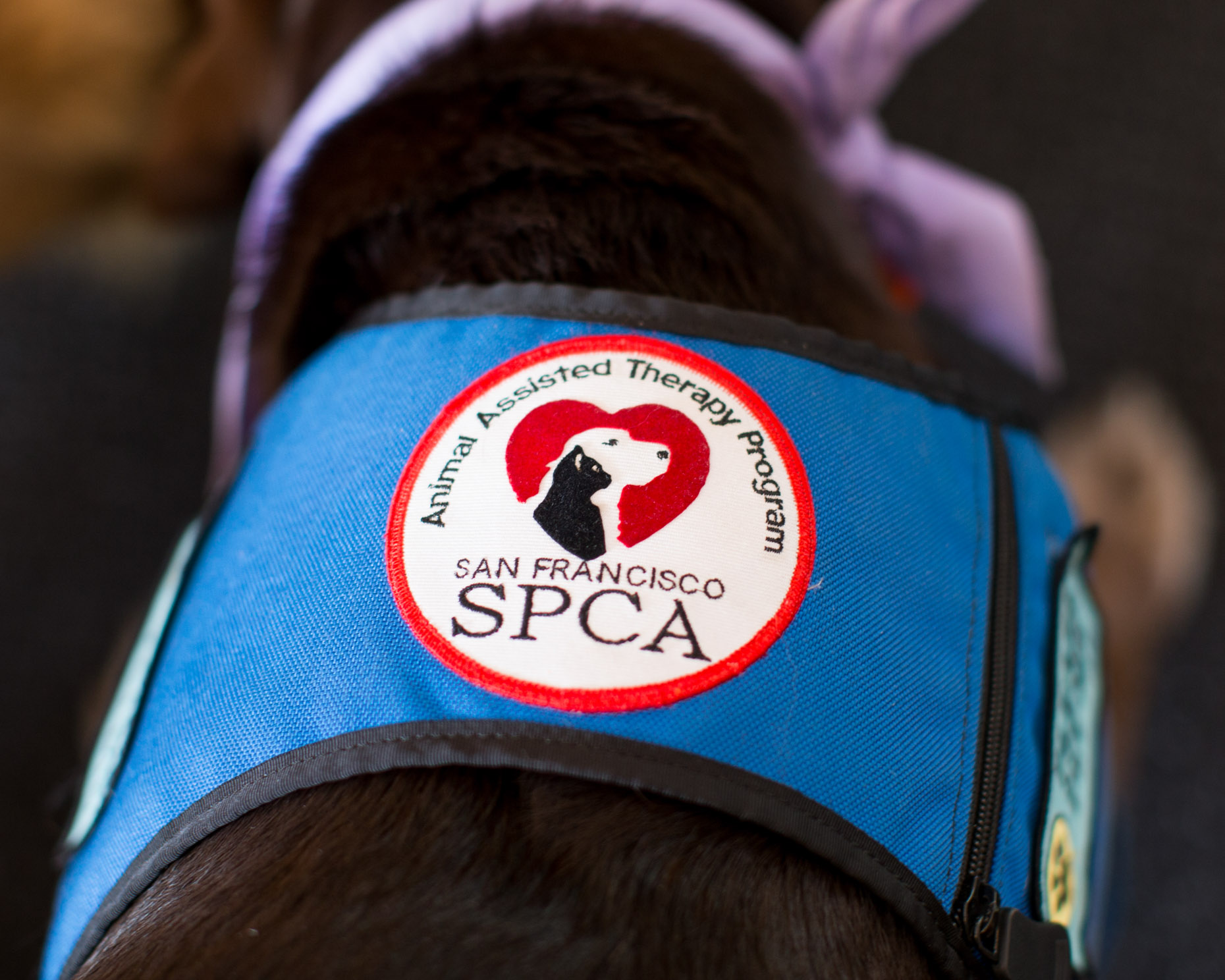 Editorial Photography | SPCA Therapy Vest Close-up by Mark Rogers