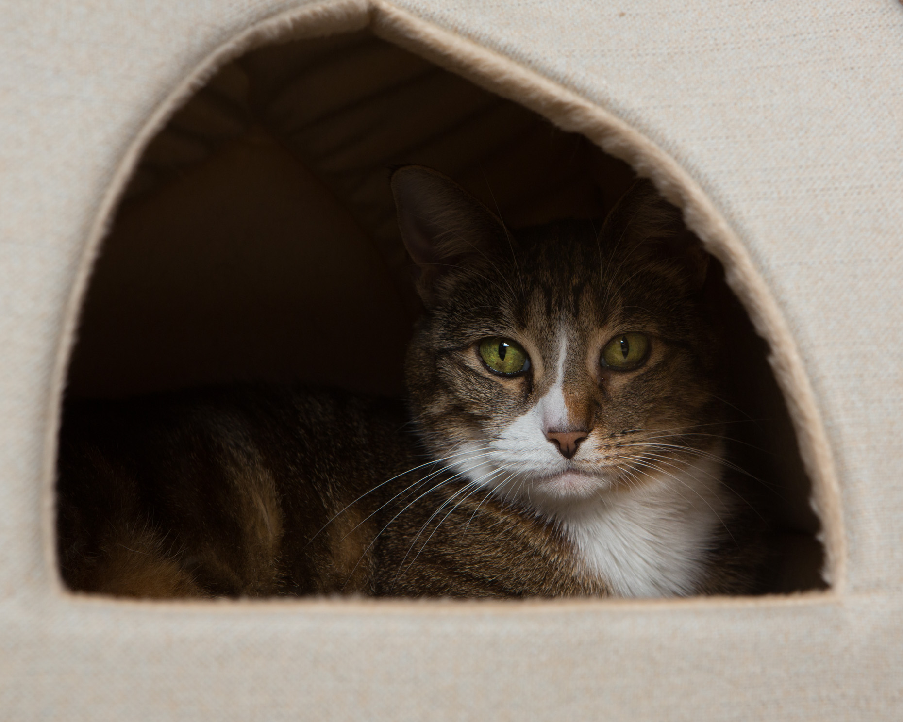 Pet Lifestyle Photography | Cat in Habitat by Mark Rogers
