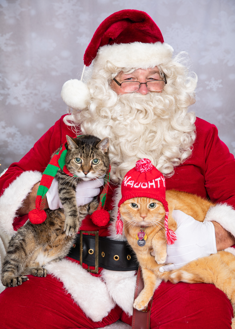 Humorous Pet Photography | Santa Claus Holding Two Cats by Mark Rogers