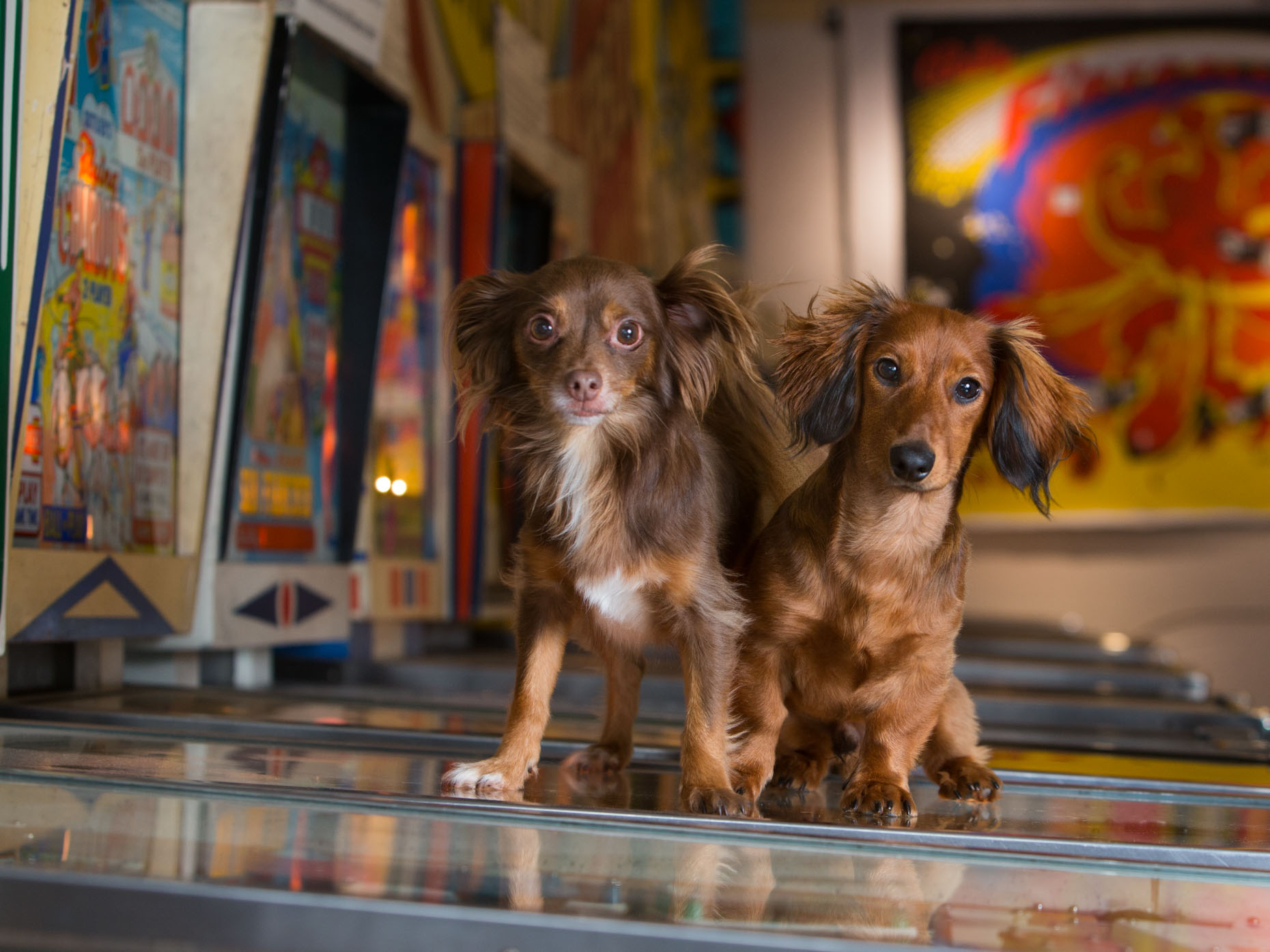 Dog and Pet Photography | Two Dogs on Pinball Machine by Mark Rogers