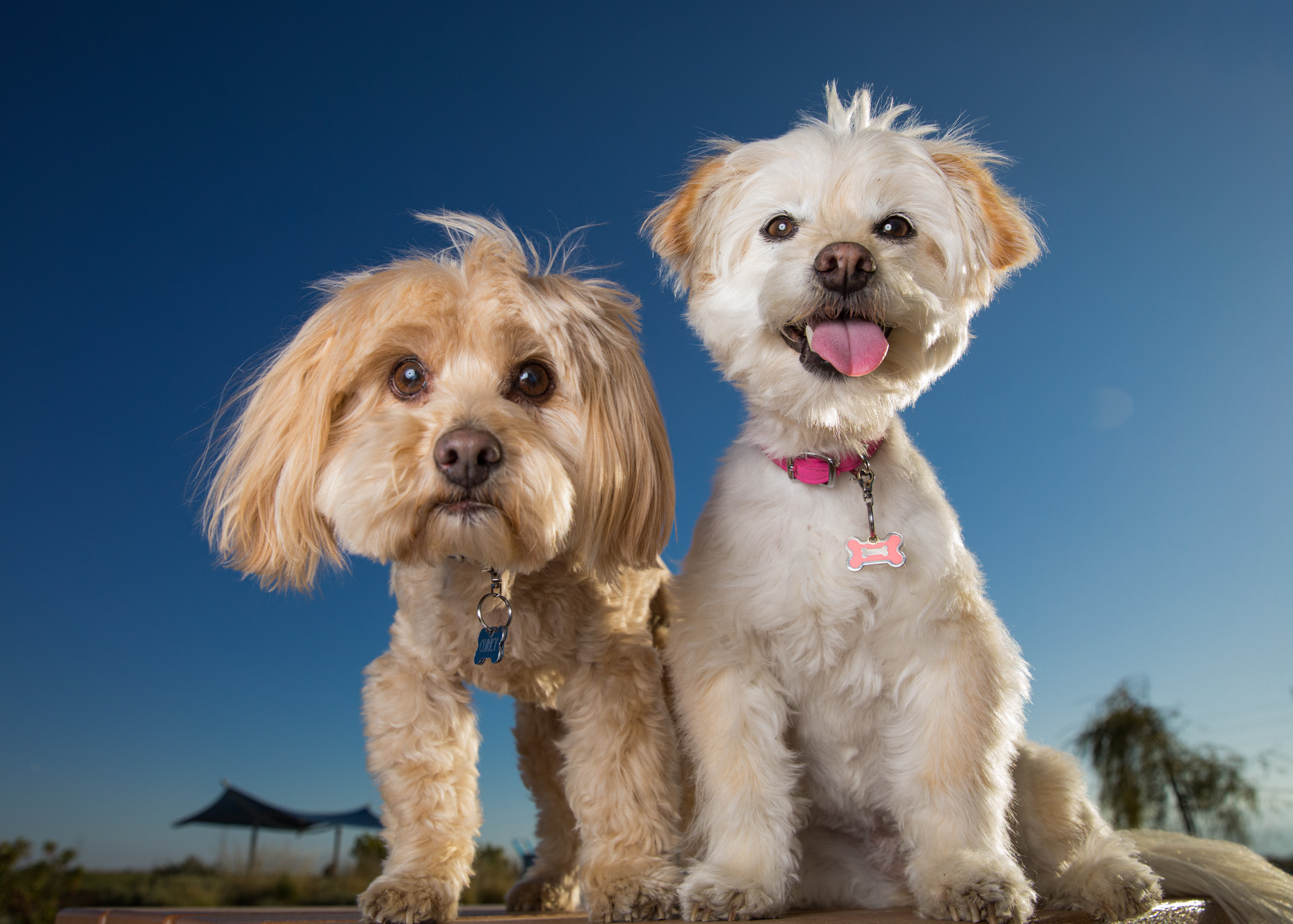 Pet Photography| Two Dog Friends Under Blue Sky by Mark Rogers