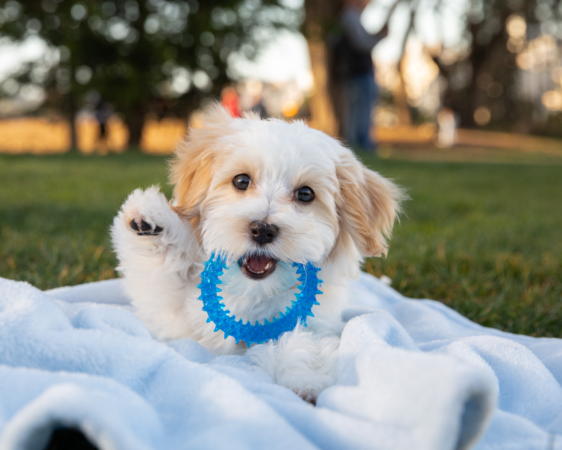 Pet Photography | Puppy with Ring Toy by Mark Rogers