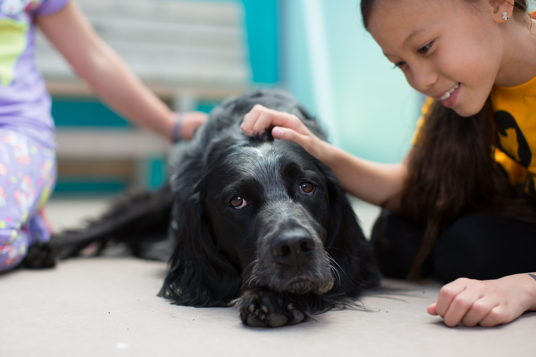 Pet Lifestyle Photography | Girl Petting Dog by Mark Rogers